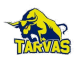 Rakvere JK Tarvas results,scores and fixtures
